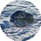 Seal-Garn-Isaf-Testemonial-Icon